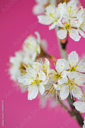 Staande foto Roze 桜の花