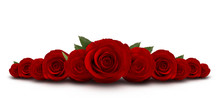 Red Roses Flower With White Background
