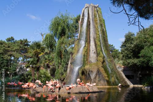 L'Ile au flamand rose - Zoo de la Palmyre (Img.9447)