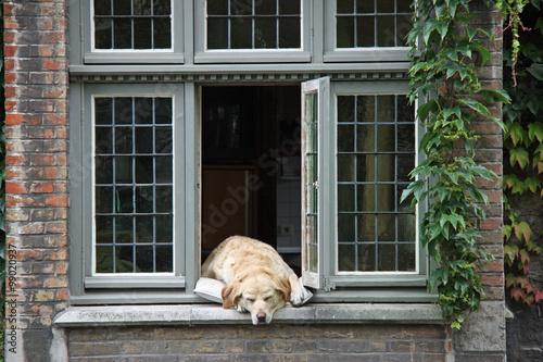 Deurstickers Brugge Bruges, chien à sa fenêtre, Belgique