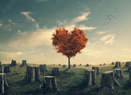 Fototapeta Drzewo w kształcie serca w wyciętym lesie obraz