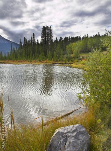 Picturesque bog Canvas-taulu