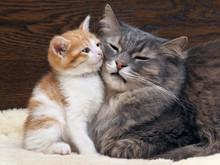 Две кошки - мама и ребенок, маленький котенок. Кошка и котенок прижались друг к другу. Кошки семья, мама и малыш любят друг друга. Нежные, ласковые отношения в семье