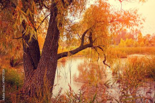 Foto op Aluminium Baksteen Misty autumn landscape at sunset