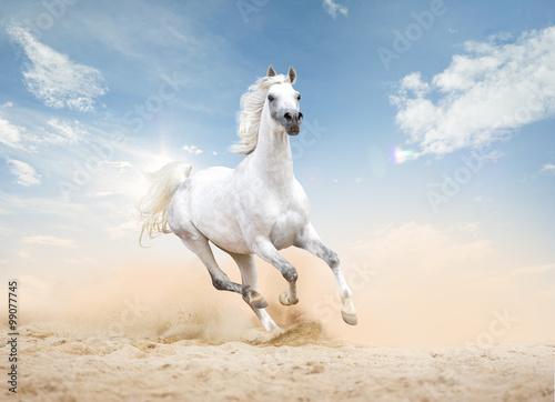 Fotografía  three arabian horses runs free in desert