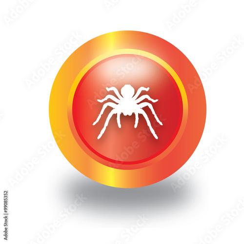 Fotografie, Obraz  spider