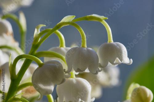 Staande foto Lelietje van dalen Detail of a white flower lily of the valley.