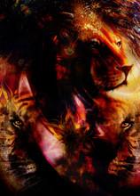 Portrait Lion And Tiger Face, ...
