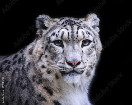 Deurstickers Luipaard isolated snow leopard on black background