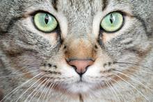 Detail Cat Eyes