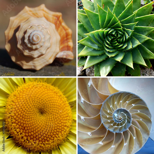 Spoed Foto op Canvas Natuur Beautiful Golden Ratio Spirals in Nature