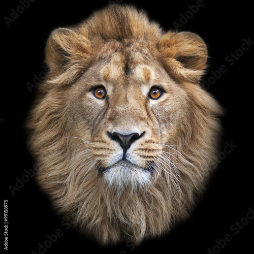 The face of an Asian lion, isolated on black background Canvas Print