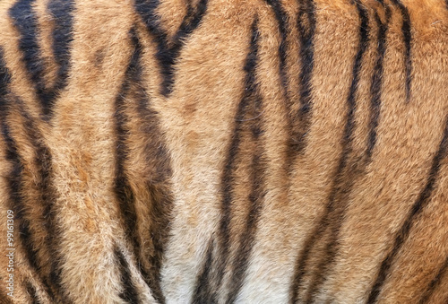 In de dag Tijger Side of a Siberian tiger body. Natural striped pattern on the orange tiger skin. Texture background of the most beautiful animal. Grace of the wildlife.