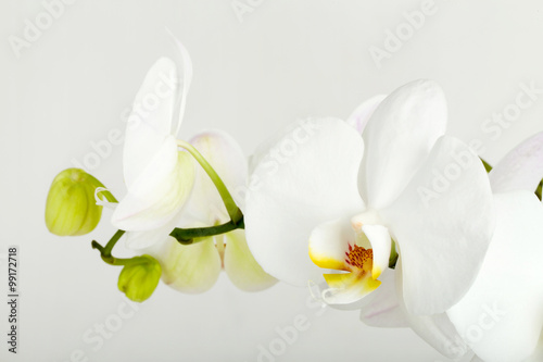Garden Poster Orchid romantic branch of white orchid