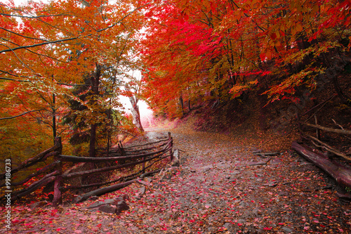 Poster Marron chocolat Beech forest in autumn on the slopes of the Carpathians