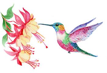 Fototapeta акварель,маленькая птичка колибри ,иллюстрация