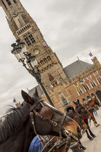 Horses On Market Place (Grote Markt) Historic Part Of Brugge