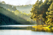 Pang Ung , Reflection Of Pine Tree In A Lake , Meahongson , Thai