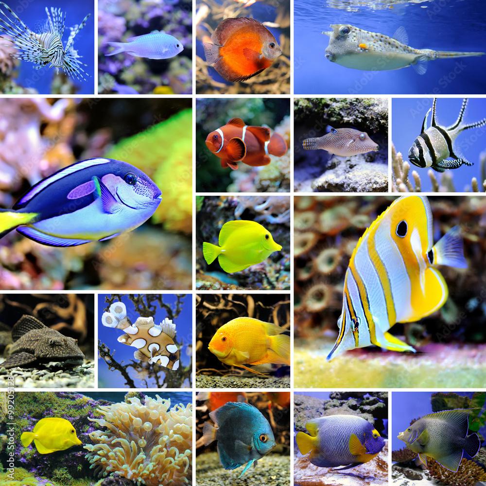 Valokuva Collage of underwater photos