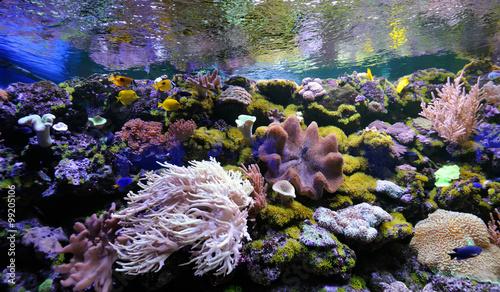 Underwater scene Canvas-taulu