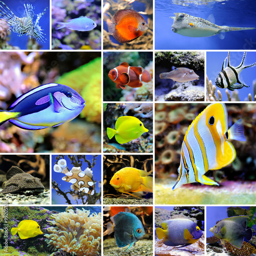 Collage of underwater photos Canvas Print