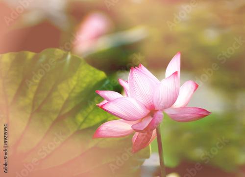 Foto op Aluminium Lotusbloem lotus flower blossom