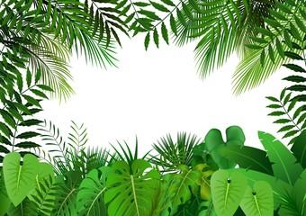 Fototapeta Jungle on white background