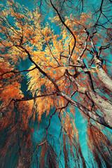 Panel Szklany Krajobraz infrarouge