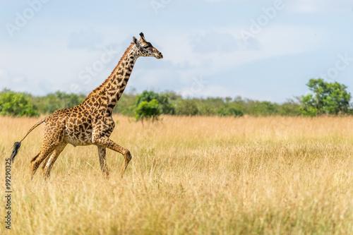 Poster Giraffe Rennende Giraffe