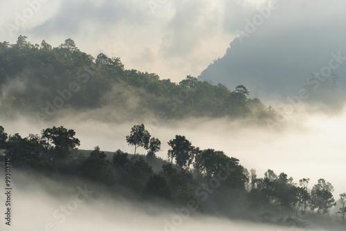 wysoki-gorski-las-spowity-mgla