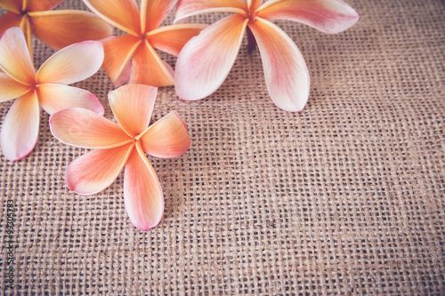 plumeria-frangipani-kwiat-ustawienie-tabeli-kopia-przestrzen-tla-tonizujace