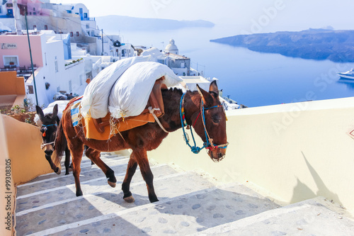 Papiers peints Ane Greece Santorini island in Cyclades donkeys