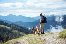 Wanderer Mit Seinen Zwei Hunden Im Salzburger Land/Österreich