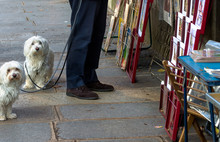 Paris White Dogs On Leashes At The Book Stalls On The Seine River