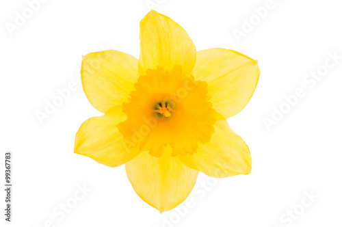 In de dag Narcis daffodil yellow flower