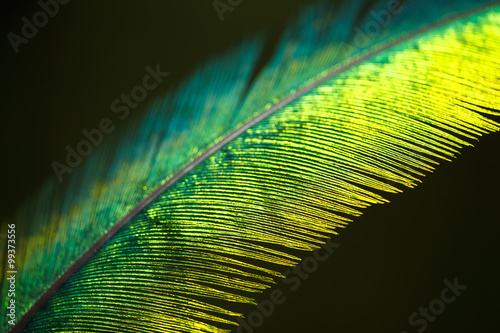 Quetzal feather