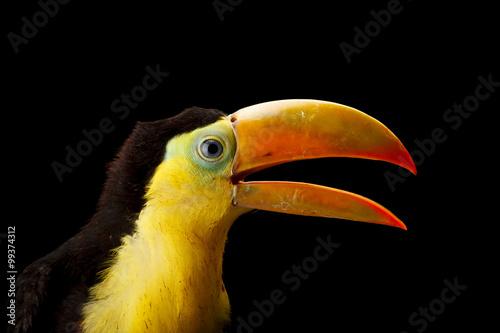 Deurstickers Toekan Baby toucan