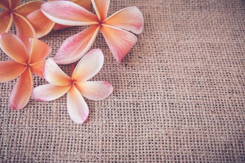 pastelowa-plumeria-na-szarym-materialowym-tle