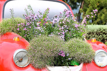 Old Car And Fields Of Flowers