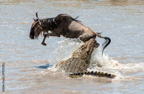 Foto auf Gartenposter Crocodile The antelope Blue wildebeest ( connochaetes taurinus ), has undergone to an attack of a crocodile.