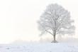 stattliche Linde im Winter