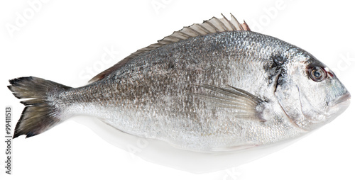 Poster de jardin Poisson Gilt-head bream (Sparus aurata L.)