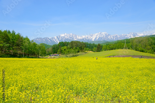 Poster Melon Northern Alps and Field mustard at Nakayama highlands in Omachi, Nagano, Japan