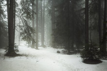 Magic Trail Through A Misty Winter Forest