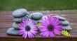 margaritas y piedras redondas