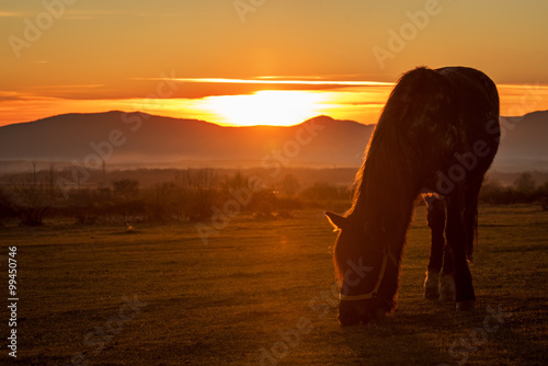 Poster Olifant Horse silhouette at sunset.
