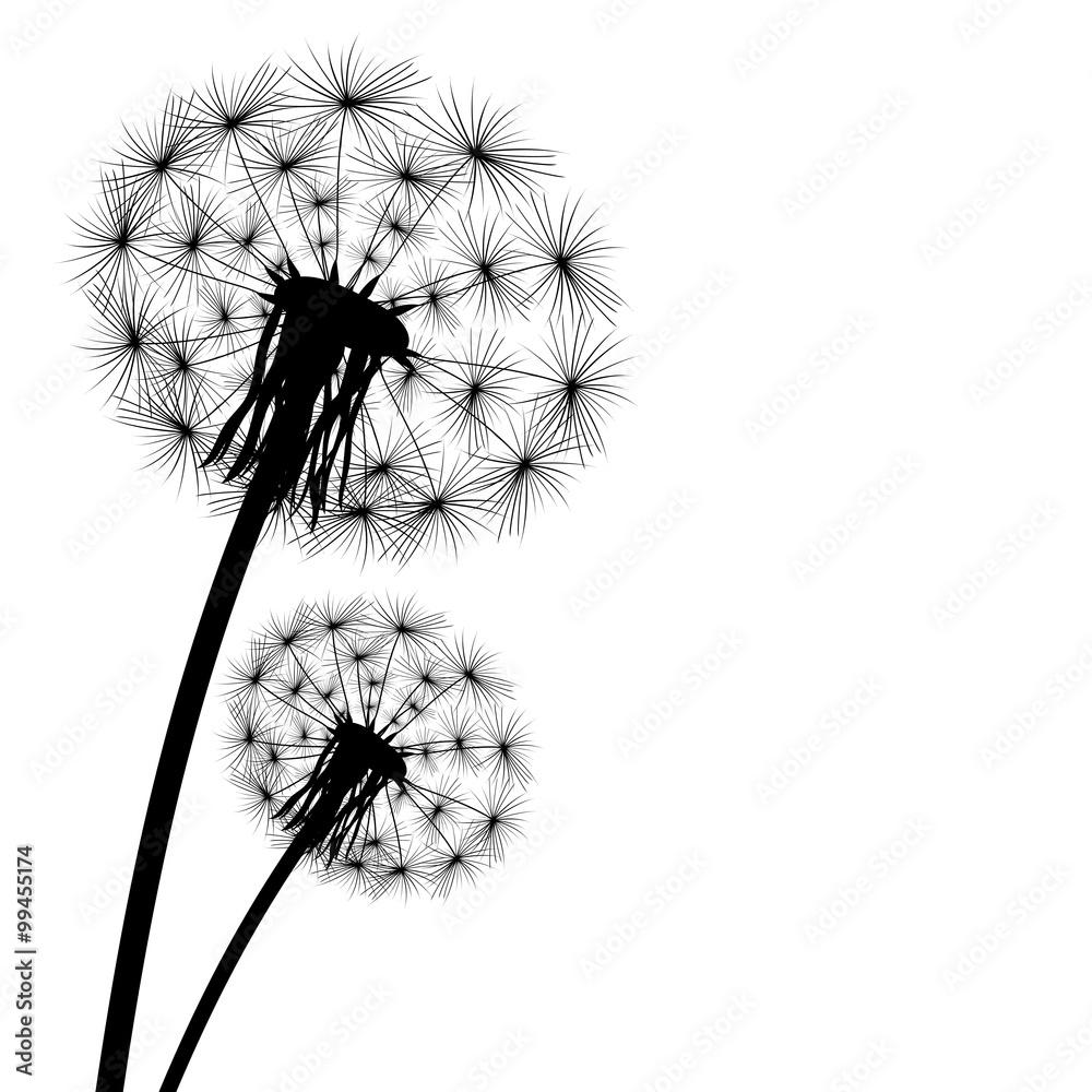 Fototapety, obrazy: black silhouette of a dandelion on a white background