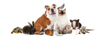 Collection Of Domestic Pets To...