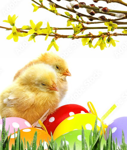 newborn chickens and easter eggs - 99504977