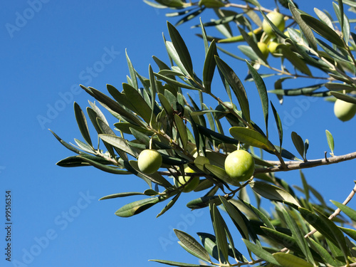 Tuinposter Olijfboom Olive tree branch with olive fruits